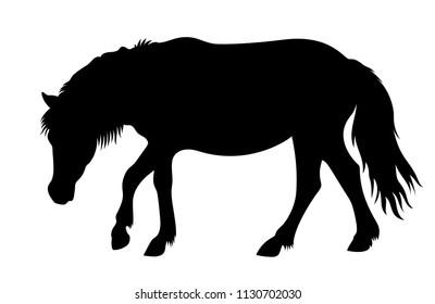 Vector walking Shetland pony silhouette farm animal illustration isolated on white background