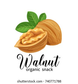 Vector walnut in cartoon style for template label, packing and emblem farmer market design.