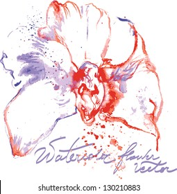 Vector water color orchid
