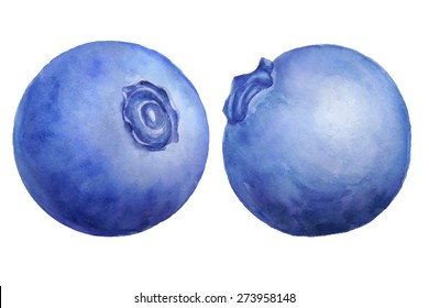 Vector watercolor blueberry set  isolated on white.