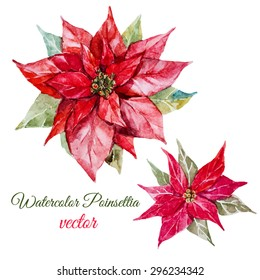 vector watercolor botanical drawing, Christmas poinsettia flowers, red leaves