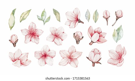 Vector Watercolor botanical illustration. Pink cherry blossom. Collection with gentle flowers, bud, branches and green leaves. Perfect for wedding invitations, cards, frames, posters, packing.