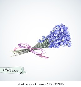 Vector watercolor bouquet of lavender.   Hand painting. Illustration for greeting cards, invitations, and other printing projects.