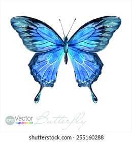 Vector Watercolor Butterfly The Ulysses butterfly Papilio ulysses