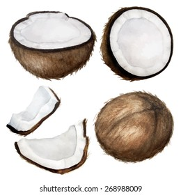 Vector watercolor coconuts set.Coconuts isolated on white. Different type of pieces. Handdrawn illustration.