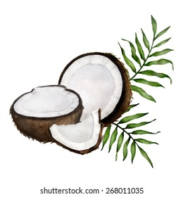 Vector watercolor composition with coconuts and tropical leaves. Isolated on white.