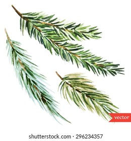 vector watercolor drawing botanical, branches of spruce, pine, isolated object