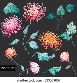 Vector watercolor  floral set. Chrysanthemum flower isolated object