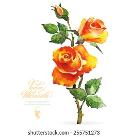 Vector watercolor flower on white backdrop. Isolated beautiful orange roses.