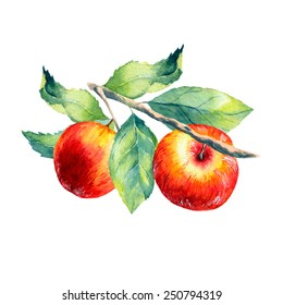 vector watercolor fruit apple branch on white background