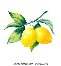 vector watercolor fruit lemon branch on white background