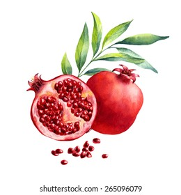 vector watercolor fruit pomegranate on white background