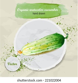 Vector watercolor hand drawn fresh organic cucumber on round paper piece with watercolor drops. Organic food illustration.