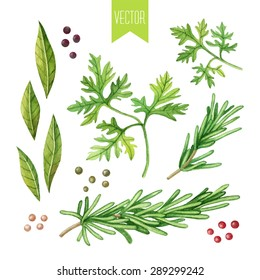 Vector watercolor hand drawn set of fresh organic herbs on a white background