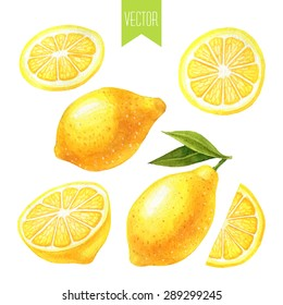 Vector watercolor hand drawn set of fresh organic lemons on a white background