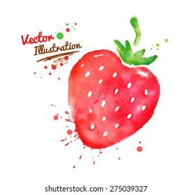 Vector watercolor hand drawn strawberry.