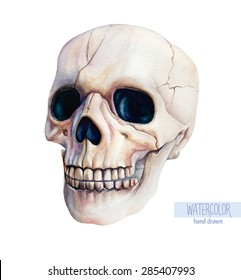 Vector watercolor hand-drawn human skull isolated on a white background