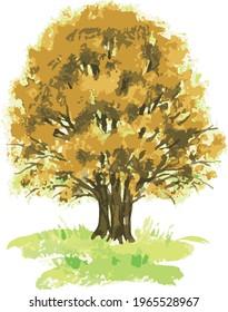 Vector watercolor iimage of deciduous tree in autumn