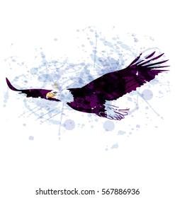 Vector watercolor illustration flying eagle