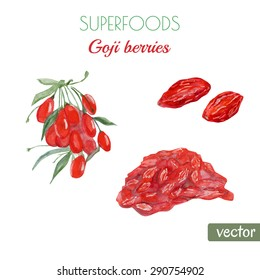 Vector watercolor illustration of super food Goji berry. Organic healthy food. Branch with berries, dried berries and heap of goji. Hand drawn isolated objects on white background.