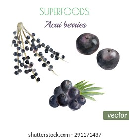 Vector watercolor illustration of super food acai berry. Organic healthy food. Hand drawn isolated objects on white background.