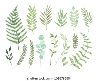 Vector Watercolor Illustrations Botanical Clipart Set Of Green Leaves Herbs And Branches