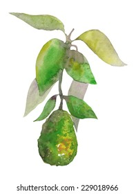 Vector watercolor isolated branch of avocado. Clean edges.