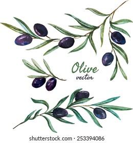 vector, watercolor, olive, set