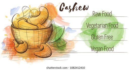 Vector watercolor sketch card of vegetarian food. Eco food. Cashew isolated on white sketch with characteristics.