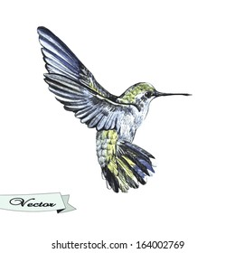 Vector watercolor sketch of a hummingbird. Vector illustration for greeting cards, invitations, and other printing and web projects.