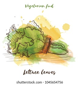 Vector watercolor sketch vegetarian food. Eco food. Lettuce leaves isolated on white sketch.