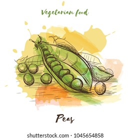 Vector watercolor sketch vegetarian food. Eco food. Peas isolated on white sketch.