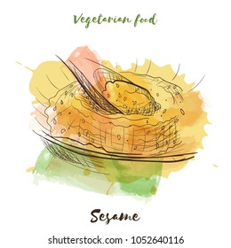 Vector watercolor sketch vegetarian food. Eco food. Sesame isolated on white sketch.