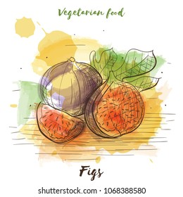 Vector watercolor sketch vegetarian food. Eco food. Figs isolated on white sketch.