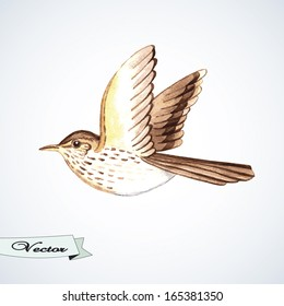 Vector watercolor songthrush. Vector illustration. Element for print design.