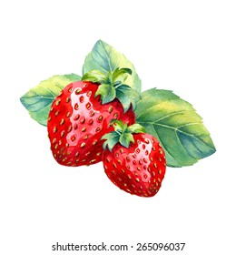 vector watercolor strawberry branch on white background