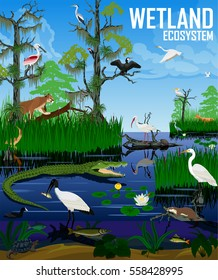 Vector wetland ecosystem illustration. Pantanal Florida Everglades landscape with animals.