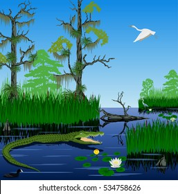 vector wetland Pantanal Florida Everglades landscape