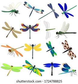 vector, white background, dragonfly, insect, set