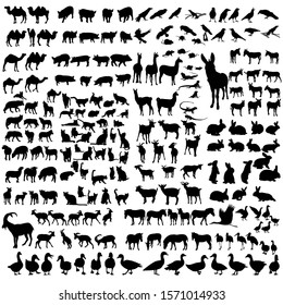 vector, white background, silhouette set of wild and domestic animals