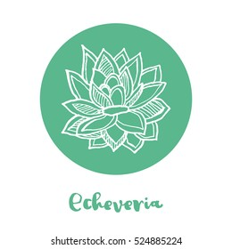 Vector white ink illustration with succulent plant. White ink illustration with succulent plant. Hand drawn Echeveria for poster / banner / postcard / logo on green circle background.