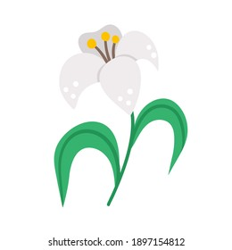 Vector white lily icon. Easter symbol flower illustration. Floral clip art. Cute flat spring plant isolated on white background.