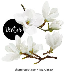 Vector White Magnolia Twigs With Flowers Illustration Set