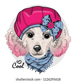 Vector white poodle with pink beret and blue scarf. Hand drawn illustration of dressed dog.