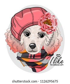 Vector white poodle with pink beret, flower and pink scarf. Hand drawn illustration of dressed dog.