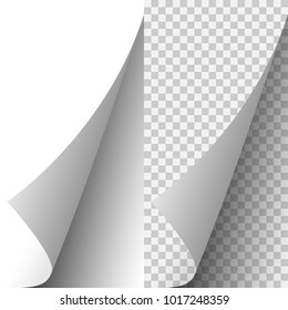 Vector white realistic paper page corner curled up. Paper sheet folded with soft shadows on light transparent background. 3d illustration. Template for your design.