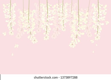 vector white wisteria on pink background for wedding,backdrop or wedding card