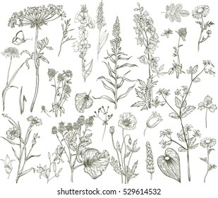 Vector wild floral collection