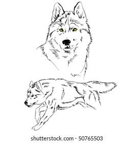 vector wolf sketch