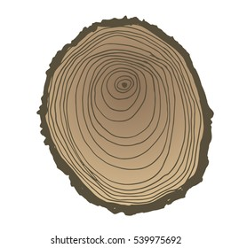 Vector wood surface as background. Tree trunk cross section. Natural pattern. Isolated on white background